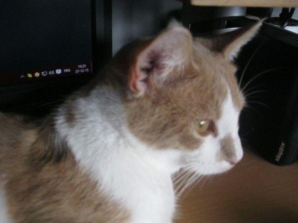 Les chats Ac64744f